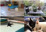 Photos d'échanges de garde d'animaux (chien, chat, lapin..) entre particuliers