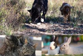 échange de garde de chien, chat , lapin
