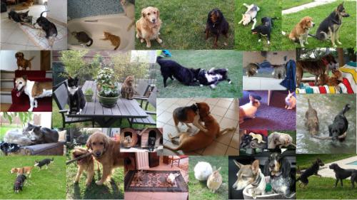 Quelques photos d'échanges de garde Animal Futé