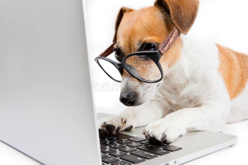 chien observant son ordinateur