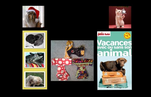 Jeu Concours de Noël, gagnez un cadeau pour votre animal