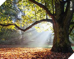 Santé par les arbres